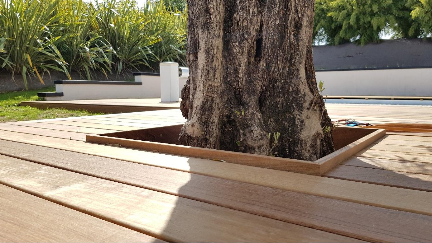 tour d'arbre terrasse bois